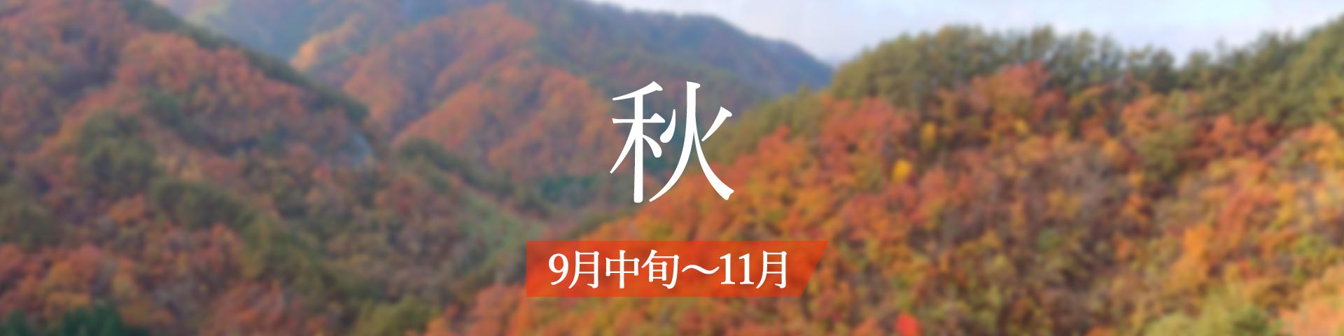 <秋>9月中旬~11月
