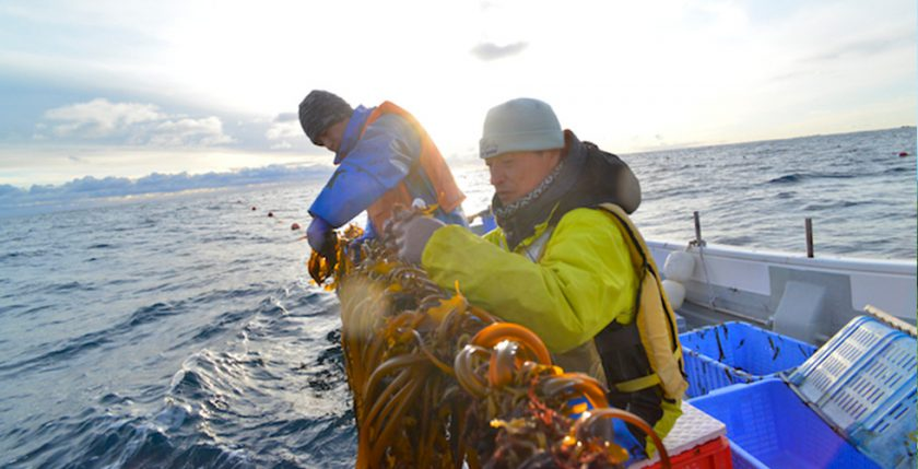 ワカメ養殖漁業